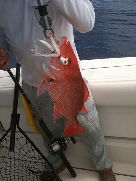 Red Snapper off 4 oz. Bucktail